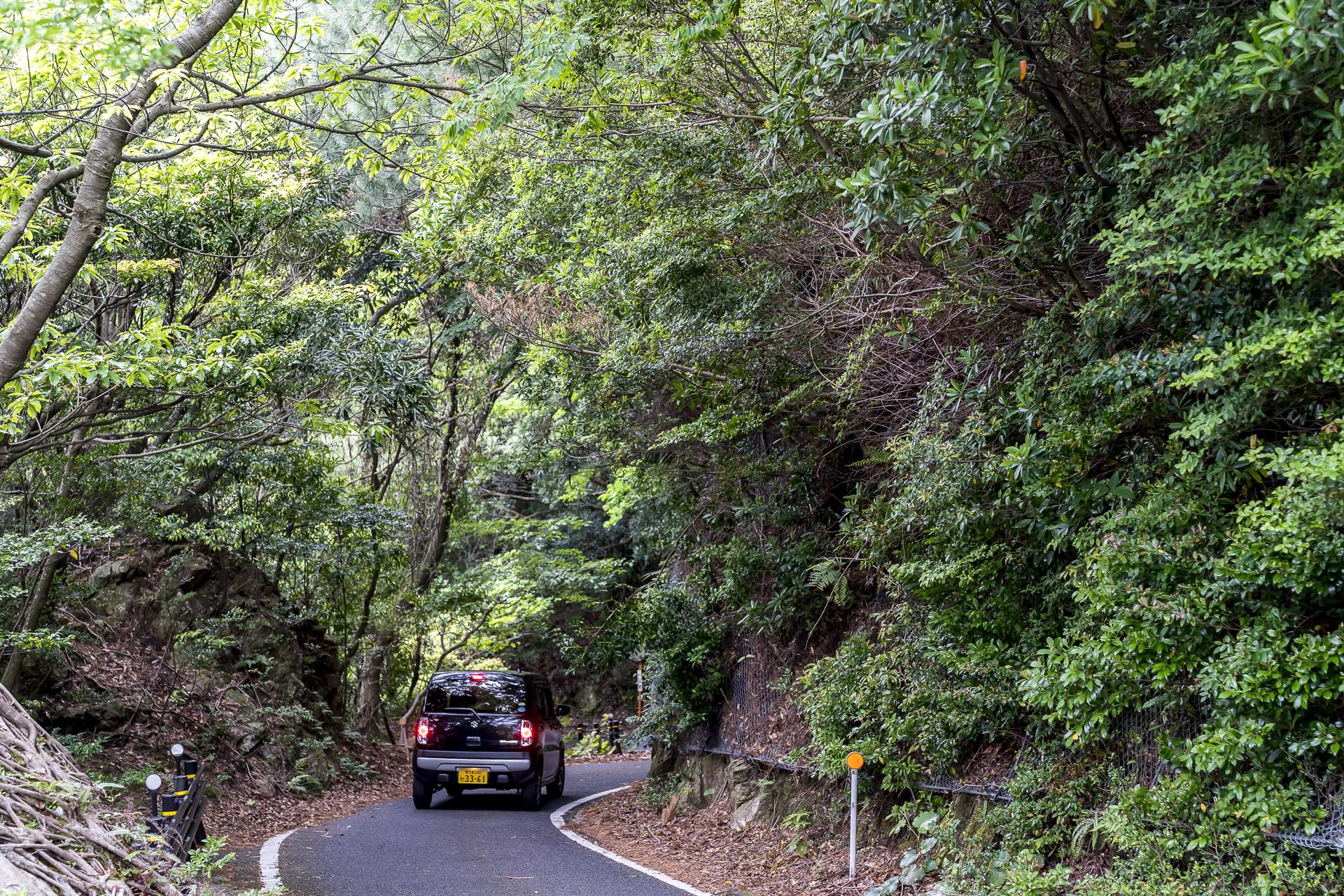 Westküste Yakushima Seibu Rindo Forest Drive