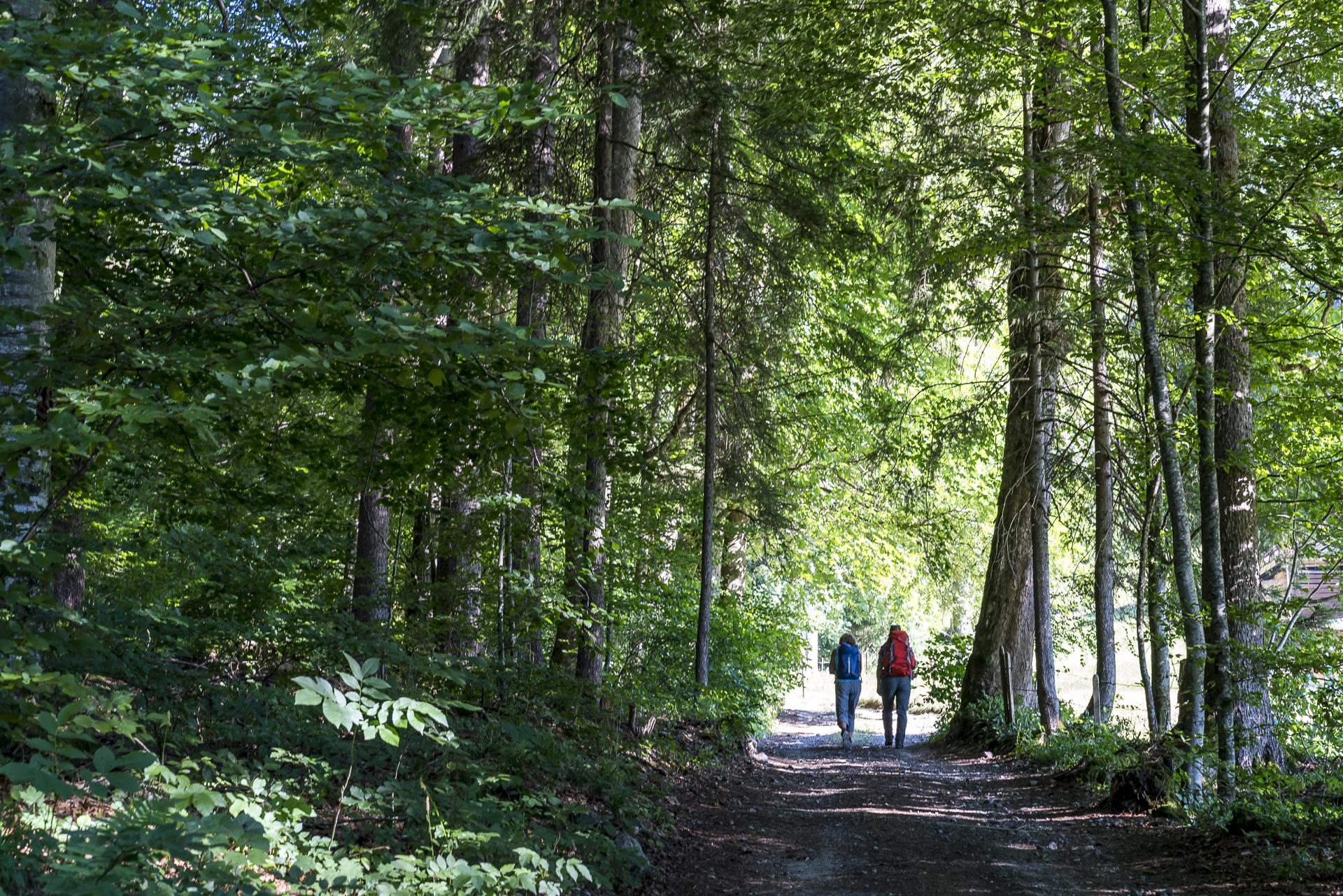 Oberwi Weissenburg Wanderweg