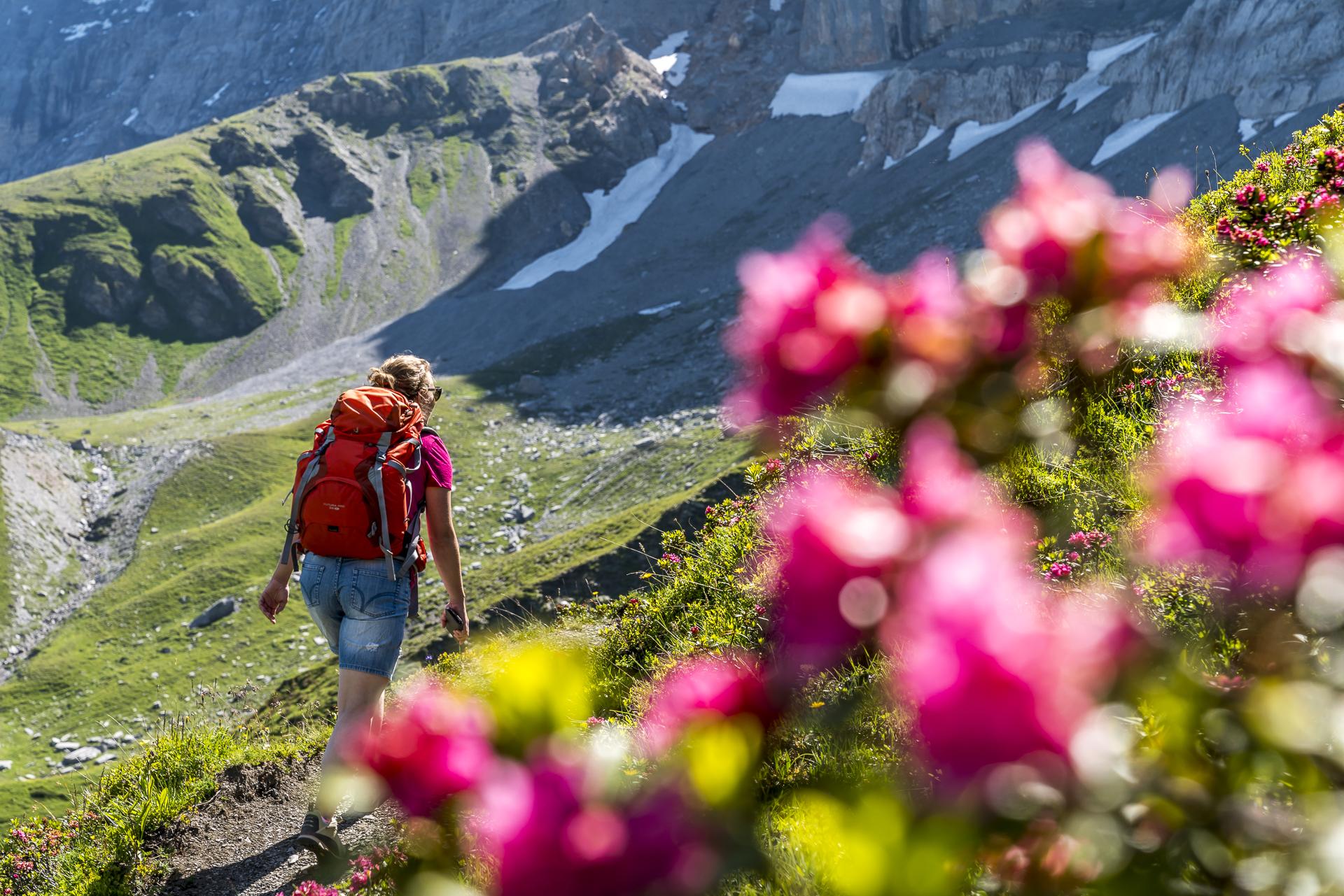 Alpenrosen in Grindelwald
