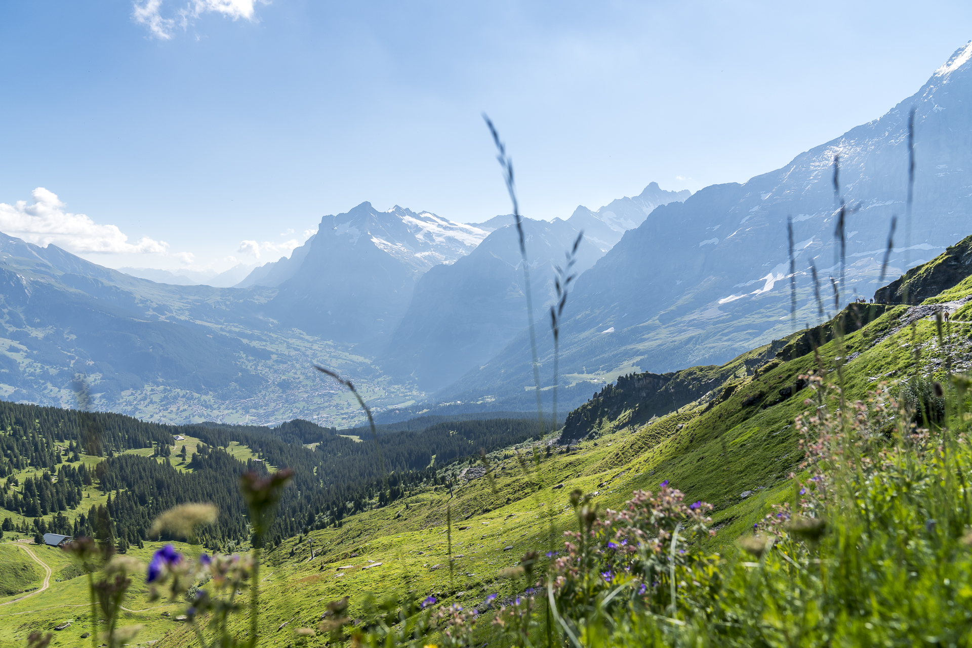 Panorama Grindelwaldtal