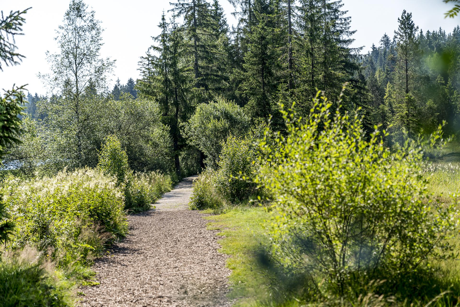 Wanderweg Etang de la Gruère