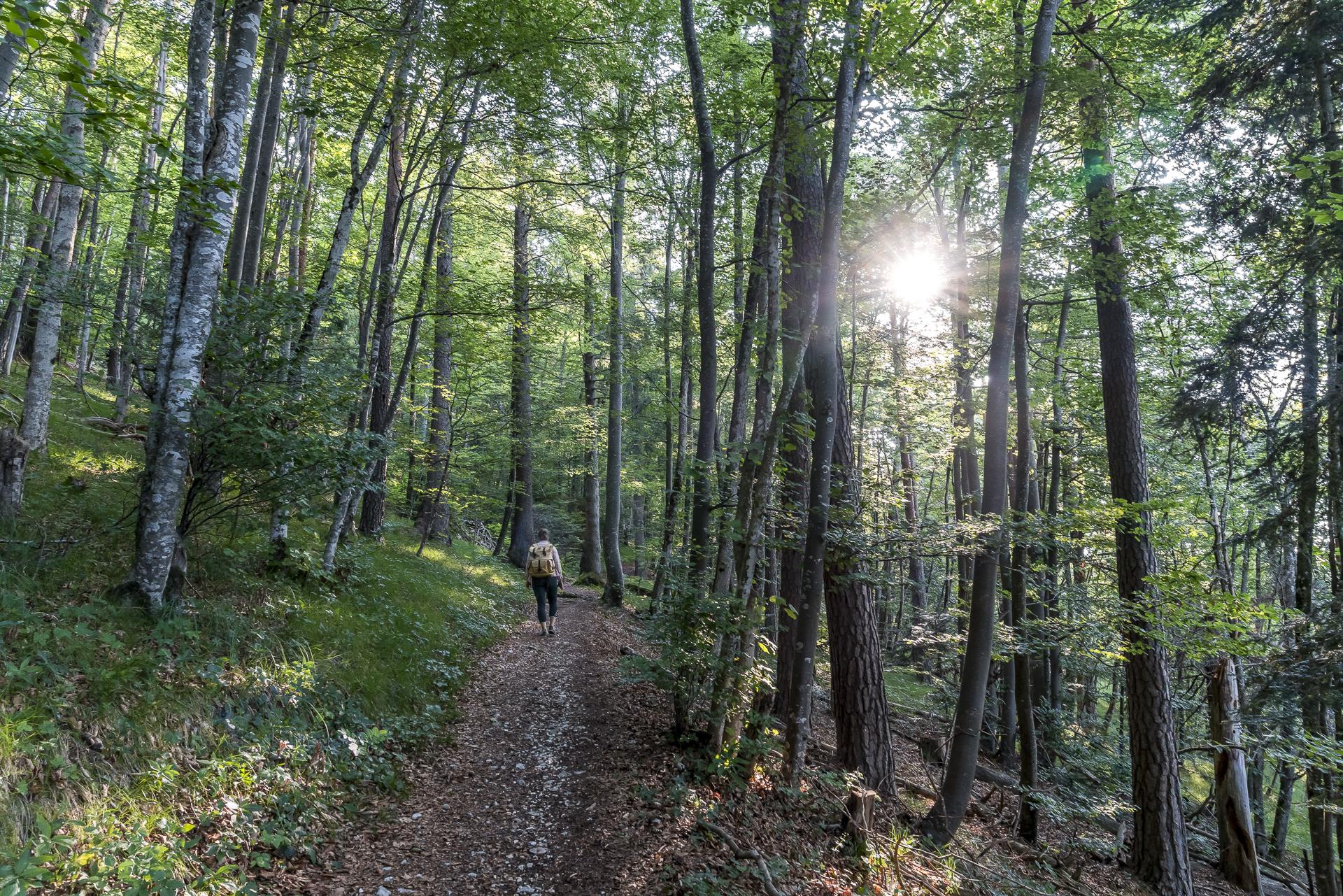 Raimeux Wald