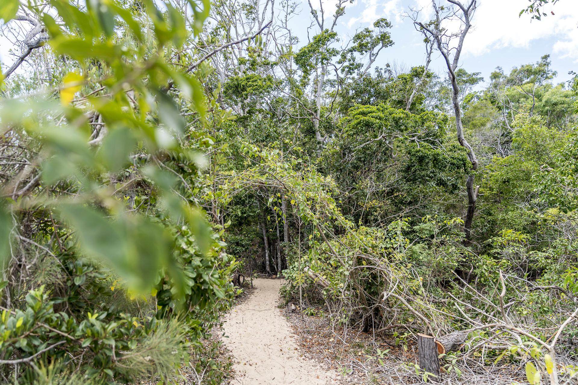 Wanderweg Whitsunday Islands