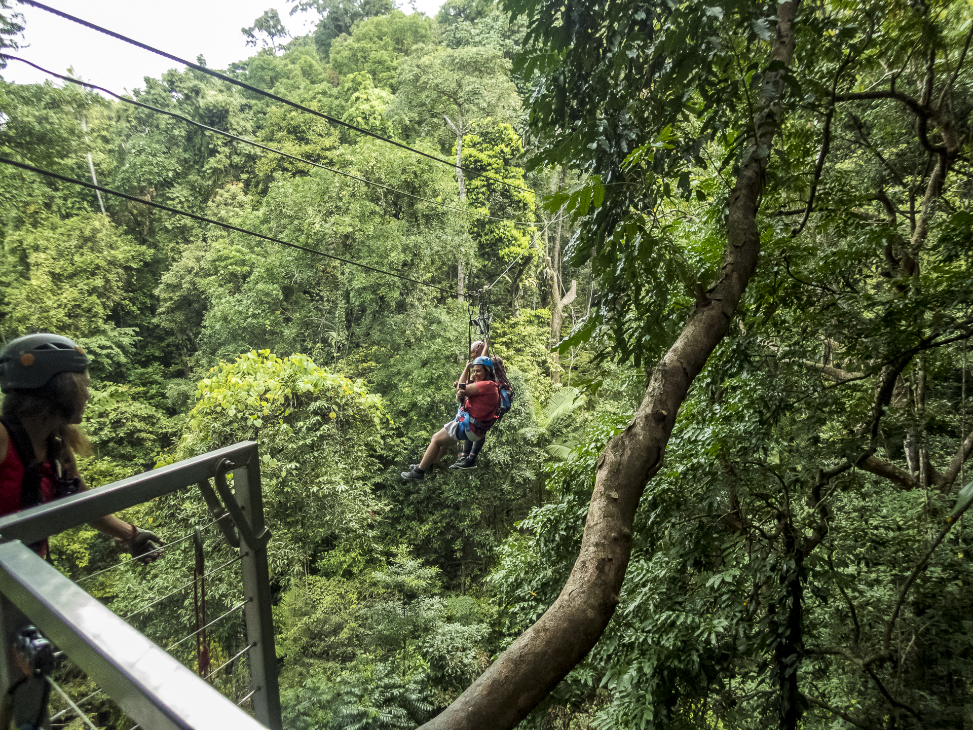 Daintree Canopy Tours
