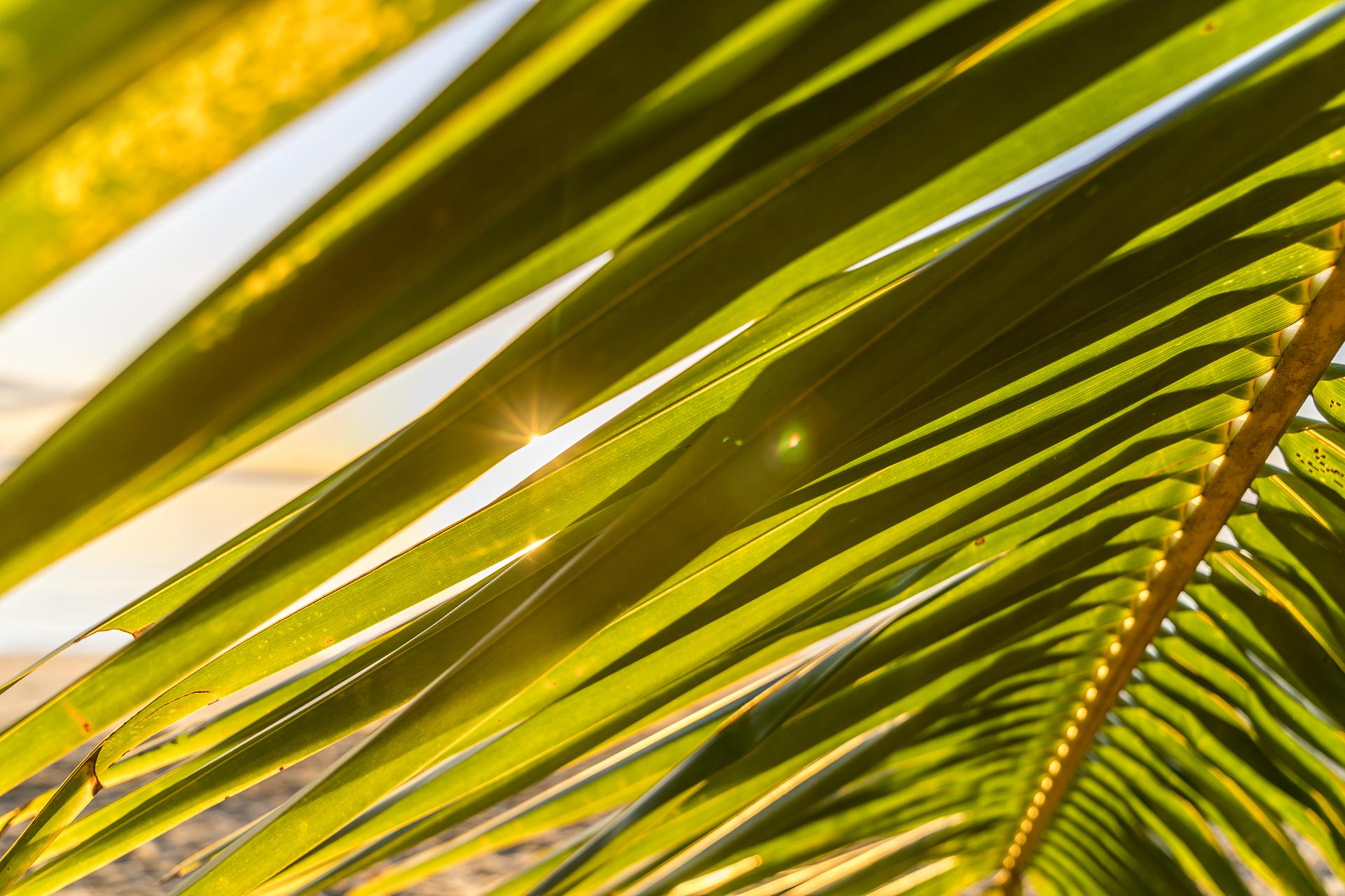 Palmen in Port Douglas
