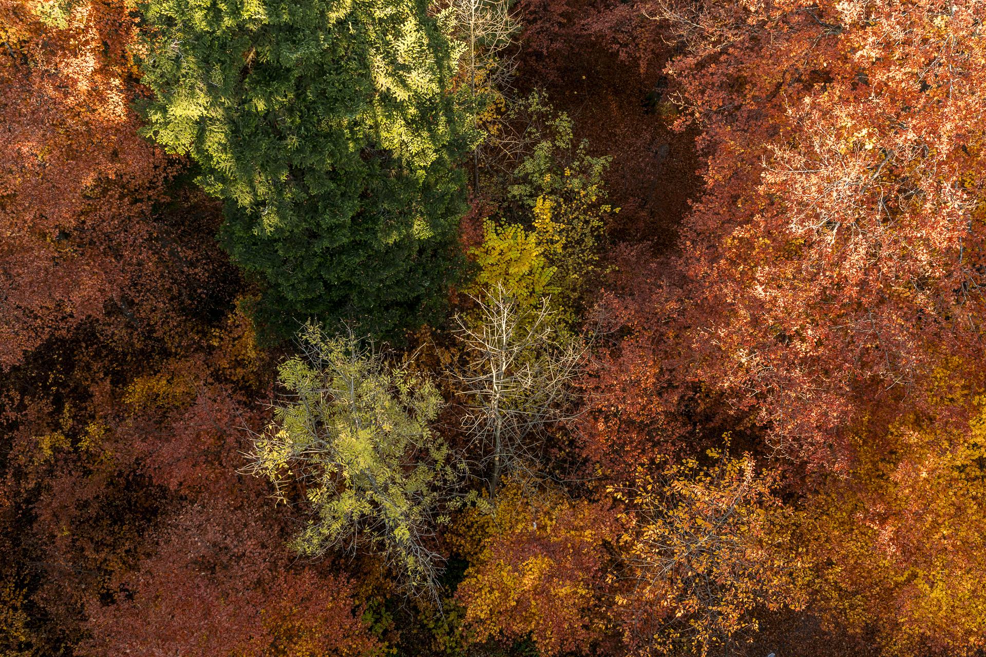Adlisberg Herbstwald