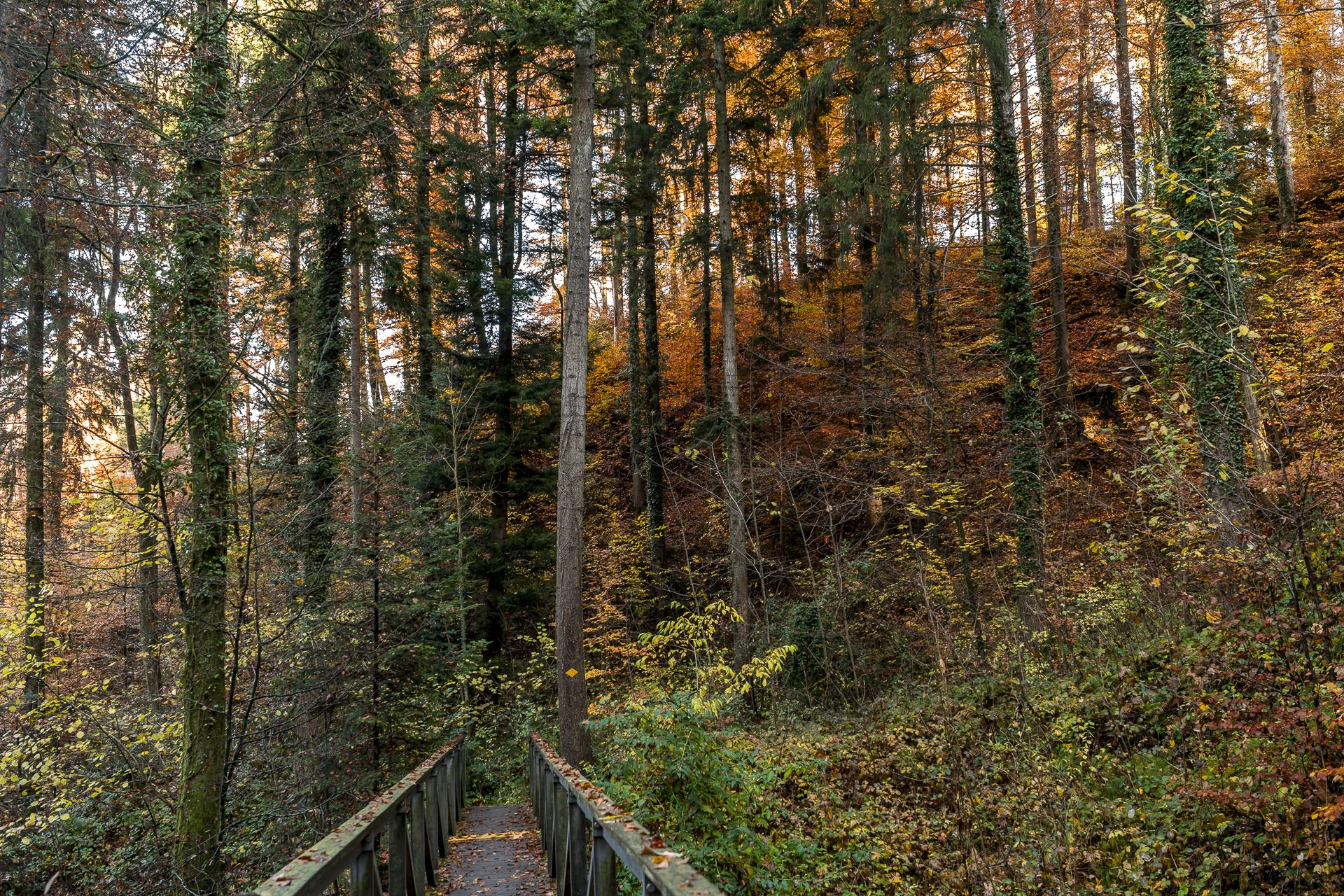 Heidelbeeriholz Fällanden