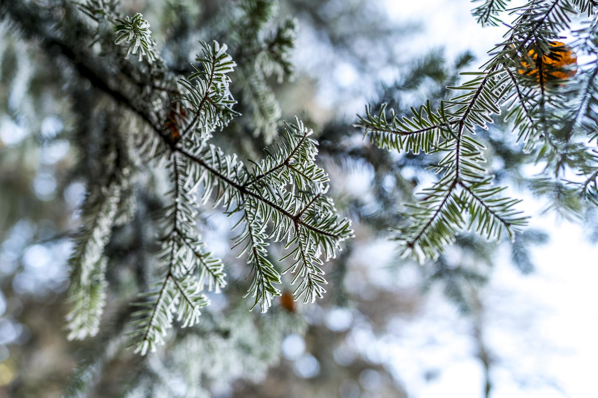 Frost Detailaufnahme