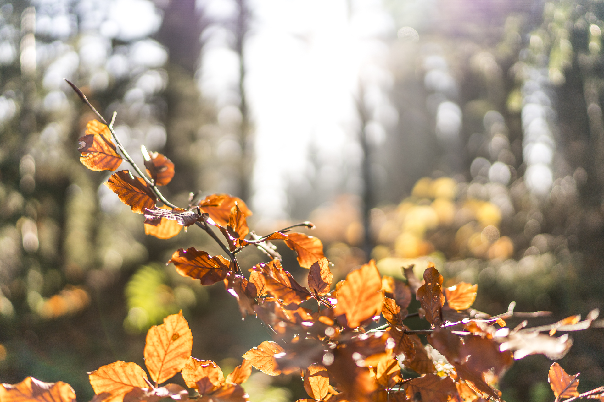 Herbst Appenzell Detail