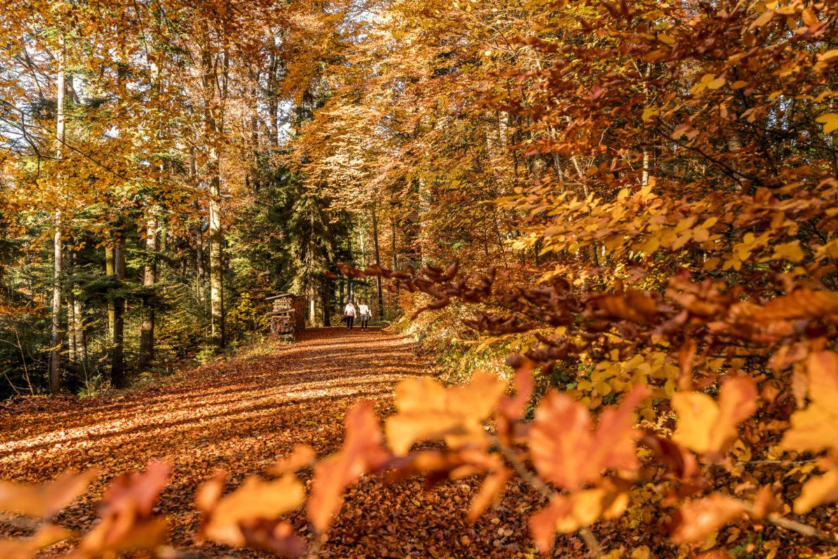 Lorenchopf-Weg: schöne Herbstwanderung in Zürich