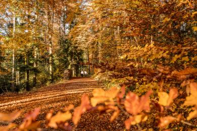 Lorenchopf-Weg Herbstwanderung Zürich