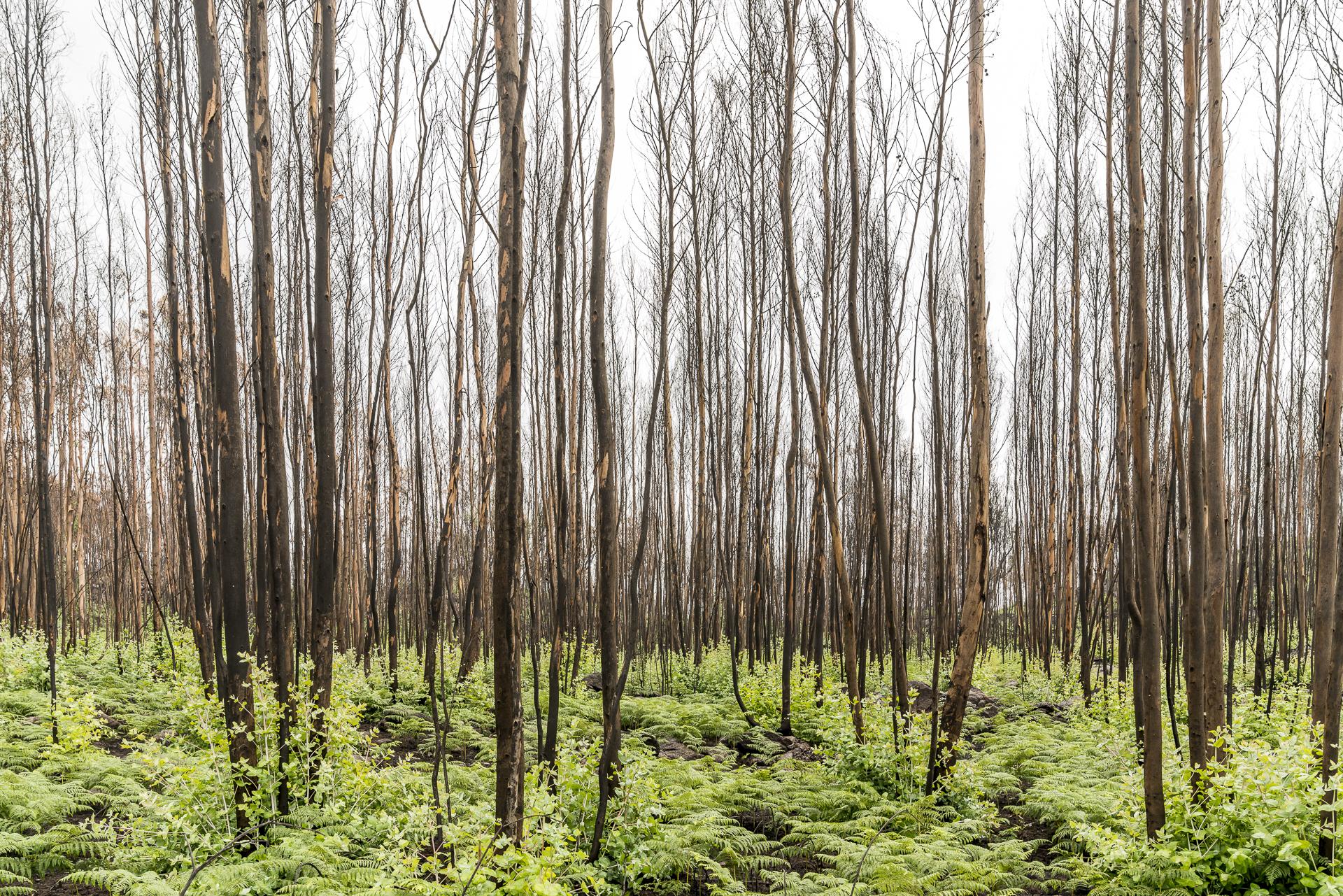 Wald nach Waldbrand in Portugal