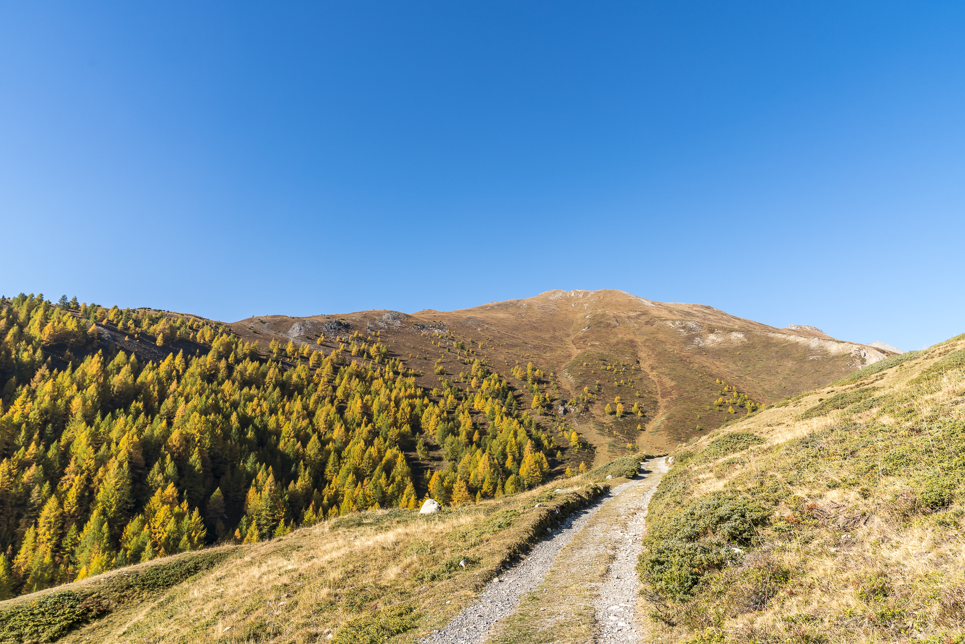 Lärchenwald Zuoz