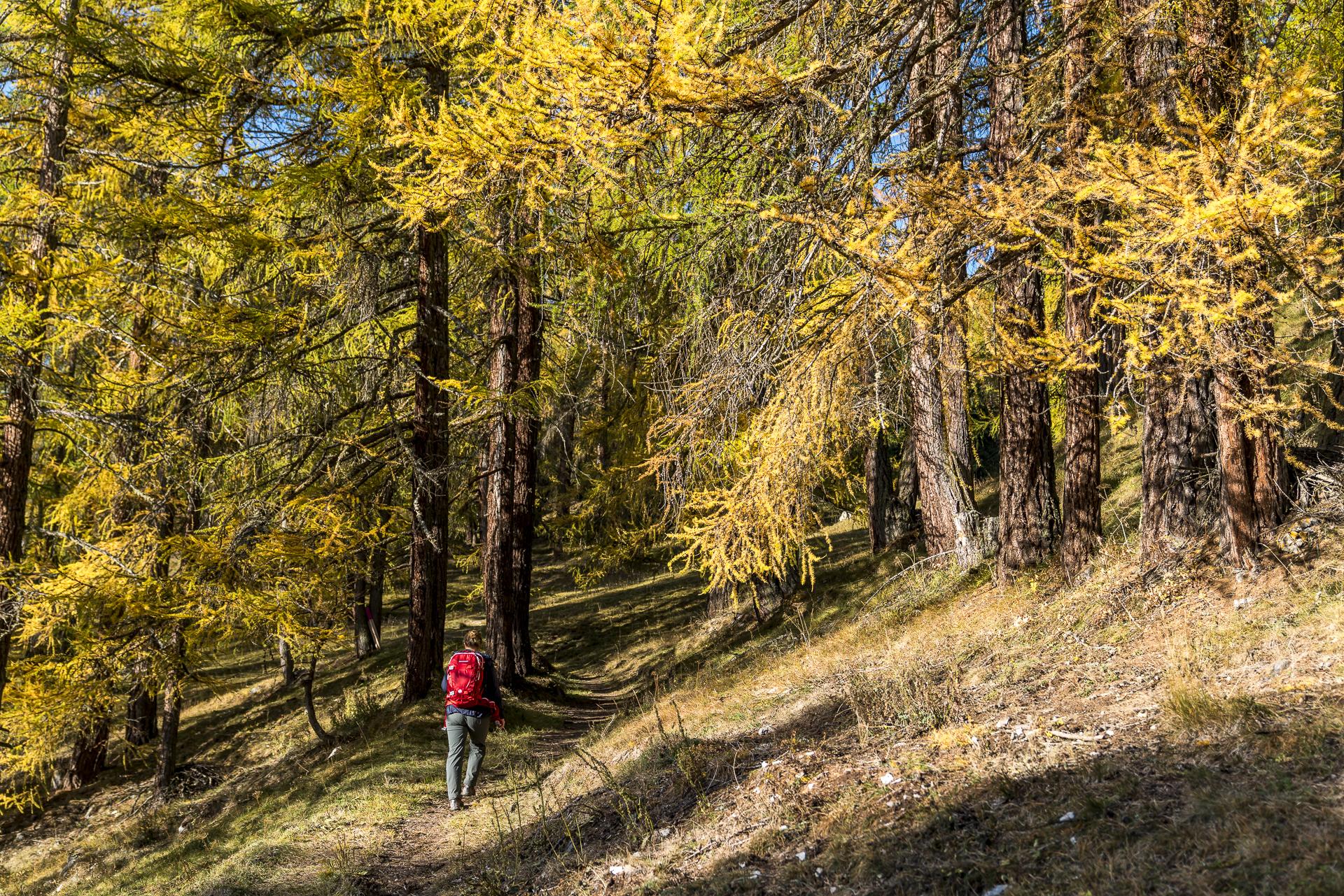 Wanderung Lärchenwald Engadin