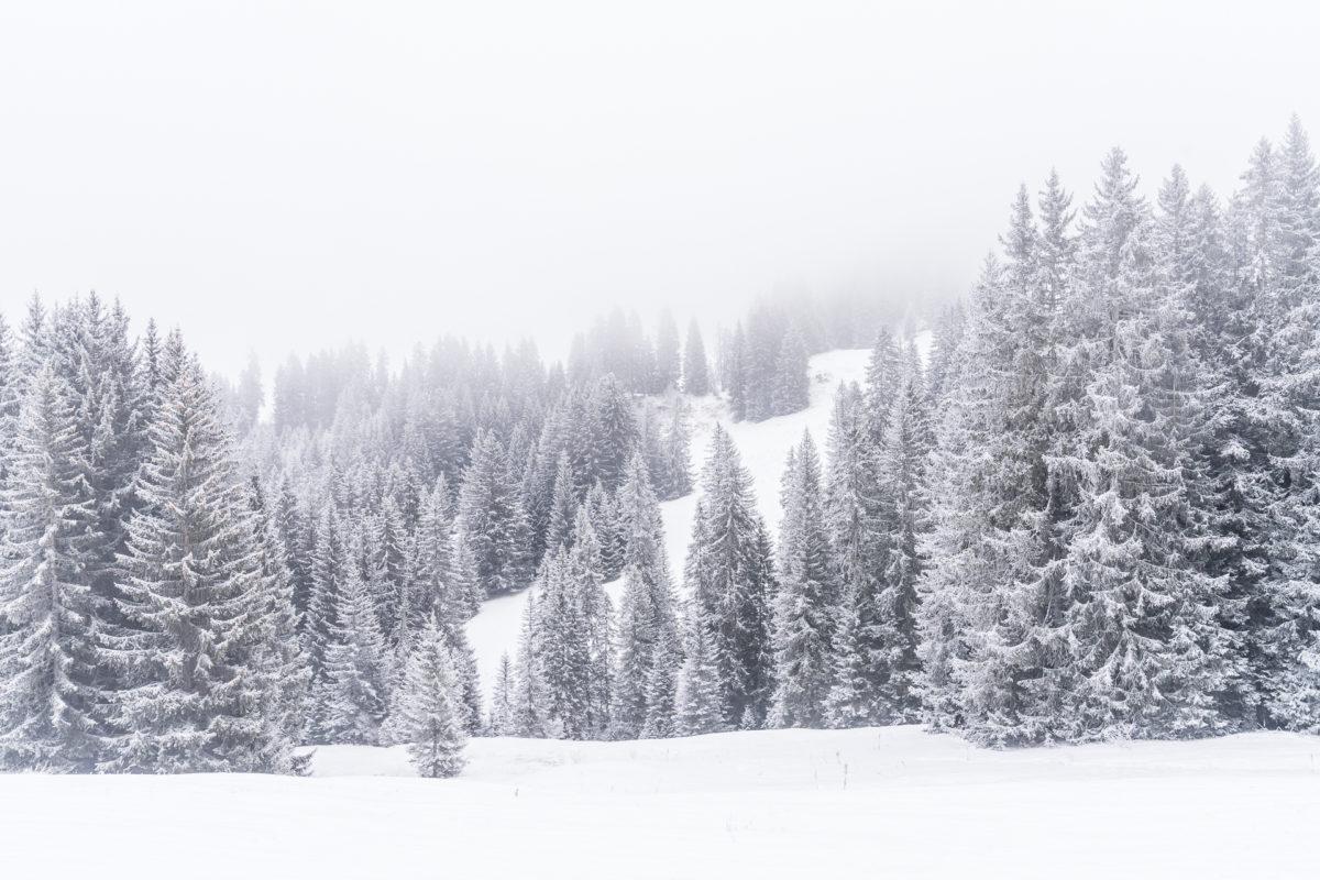 Schneebedeckte Tannen Winter