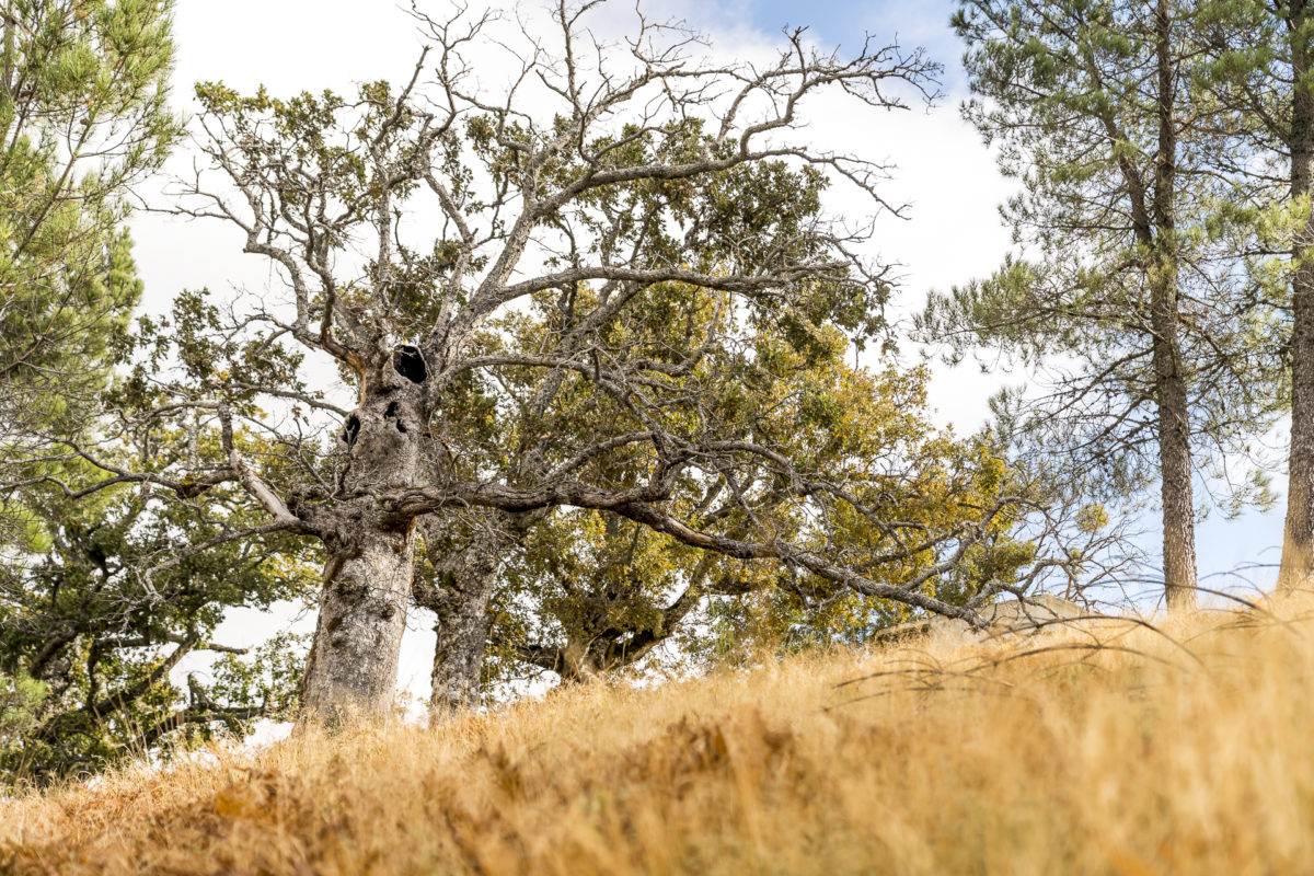 Natur im Naturpark Serra da Estrela
