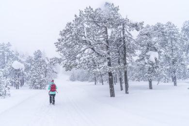 Winterwanderung in 3 Gängen durchs Winterwunderland Sörenberg