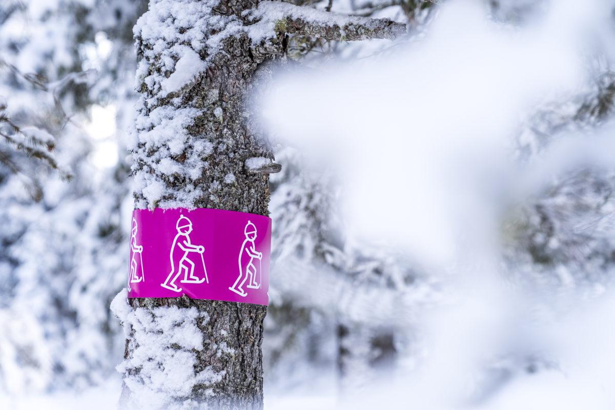 Schneeschuhtrail Jänzi Trail
