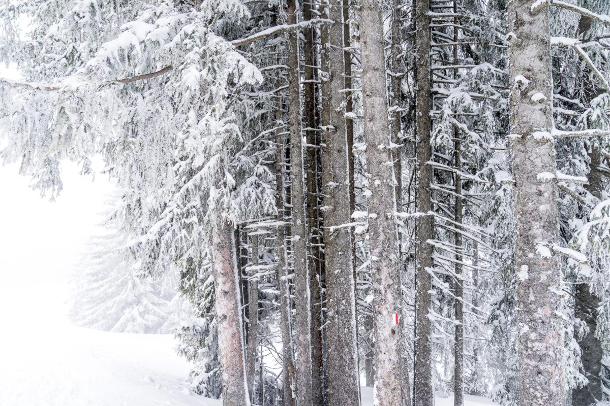 Wald Winterlandschaft