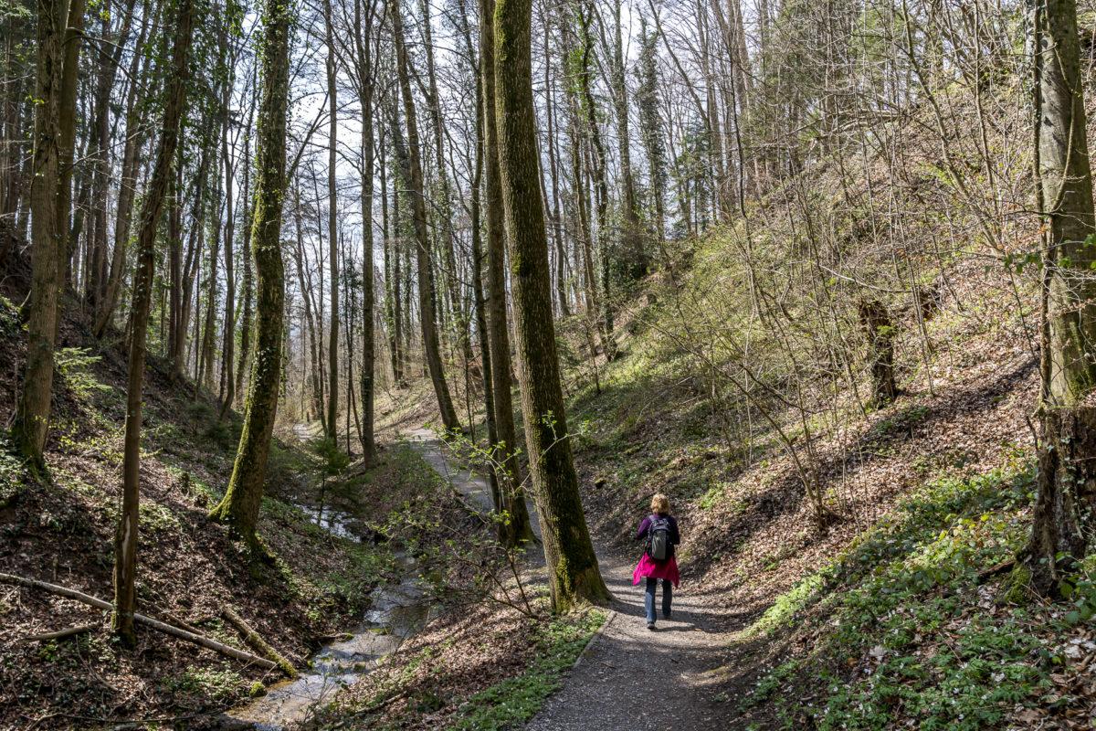 Erlenbacher Tobel Rundwanderung