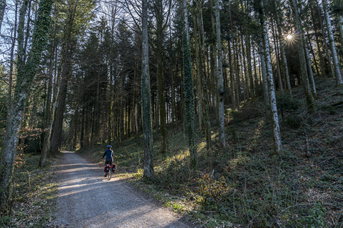 Luzerner Hinterland Wald