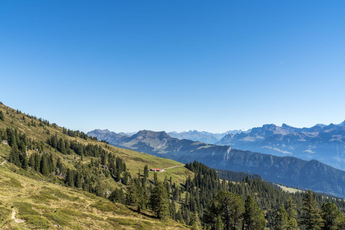 Niederhorn Berner Oberland