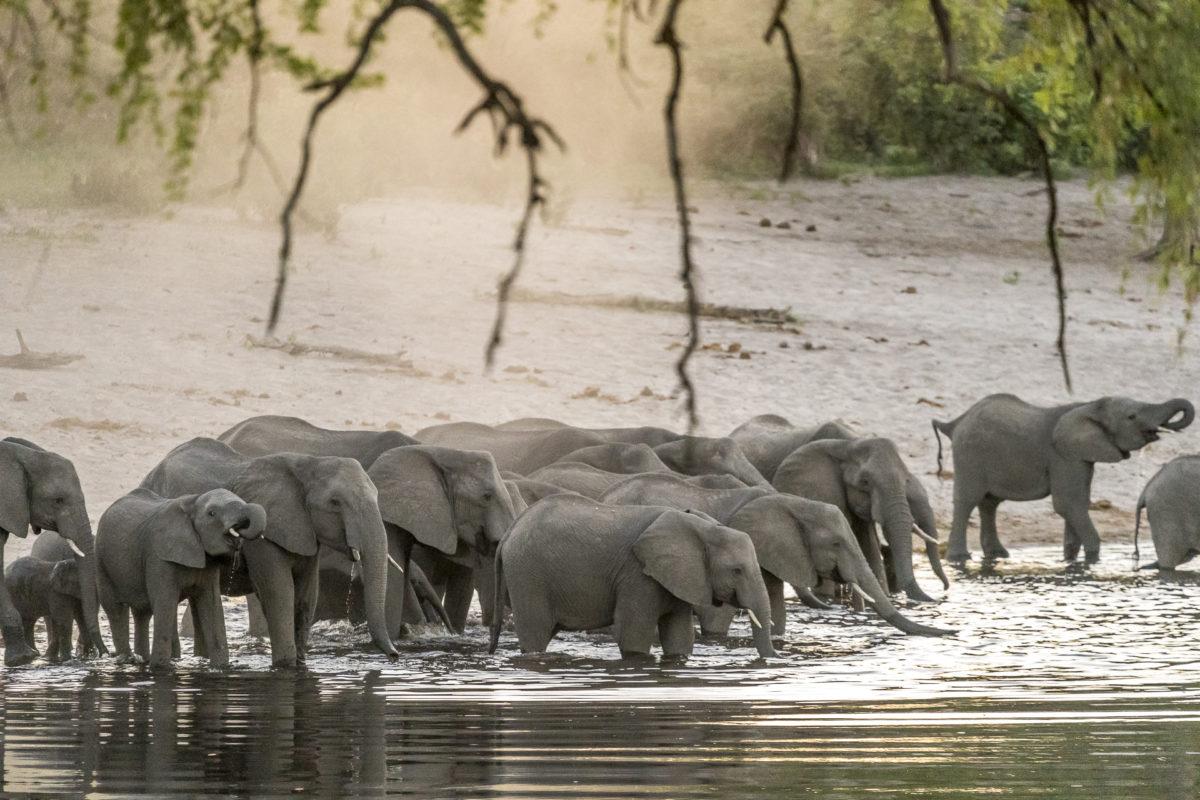 Bwabwa Nationalpark Elefanten
