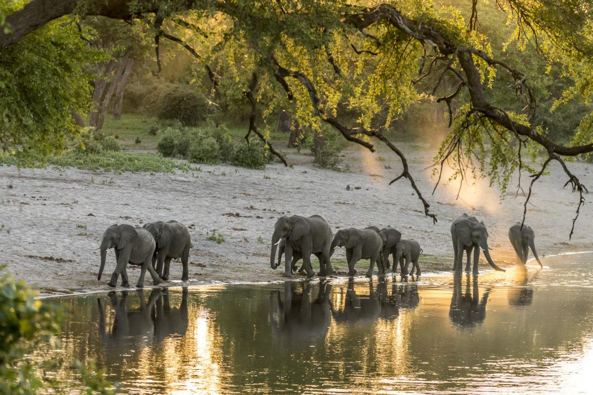 Elefanten Namibia