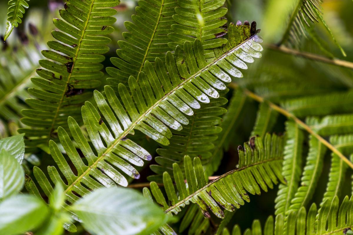 Regenwald Grün