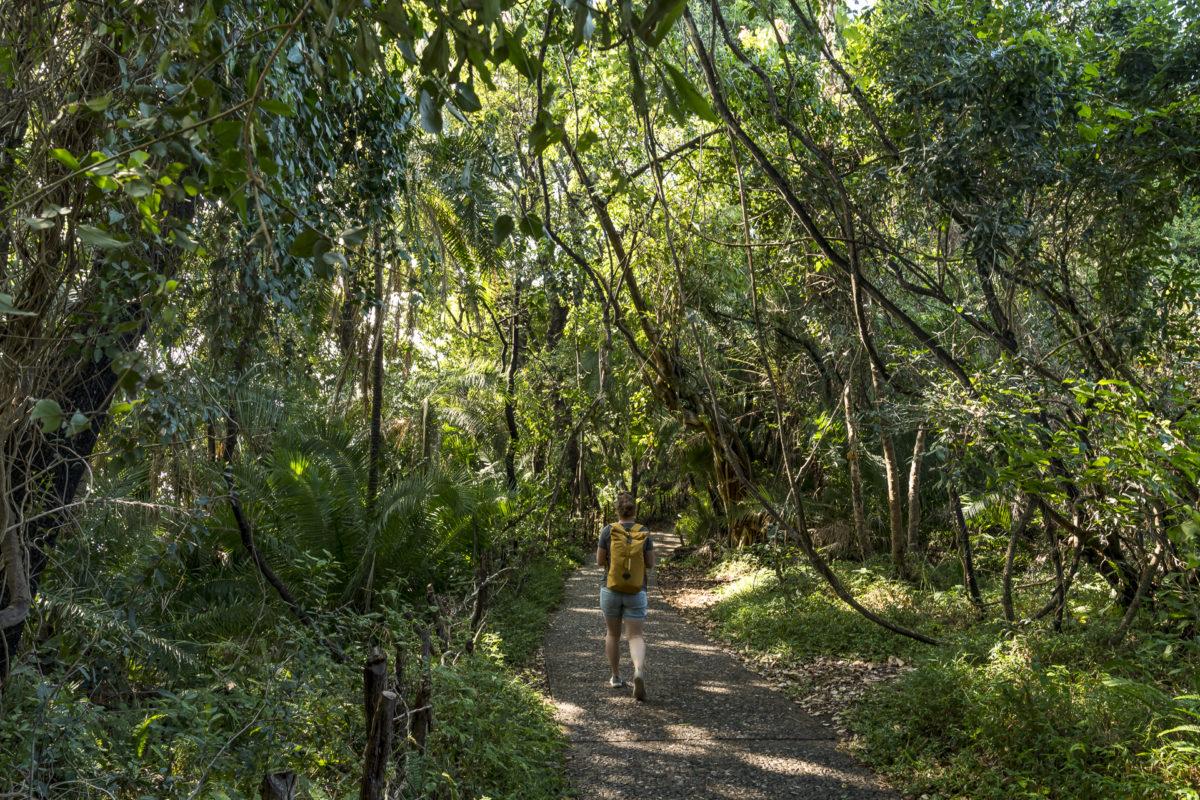 Regenwald Victoria Falls