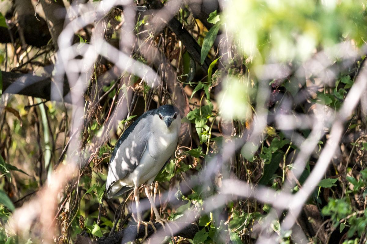 Detailfoto Vögel in Namibia