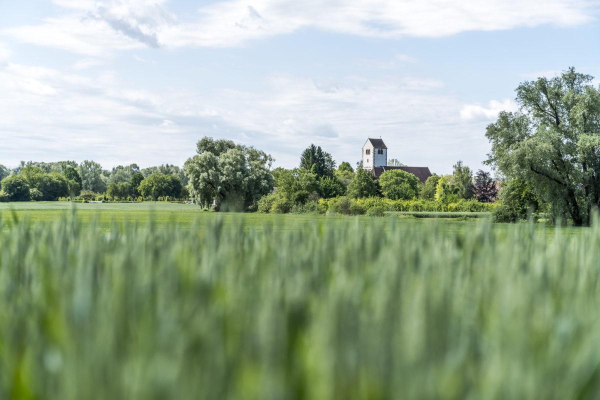 Bodensee Radweg Landschaft