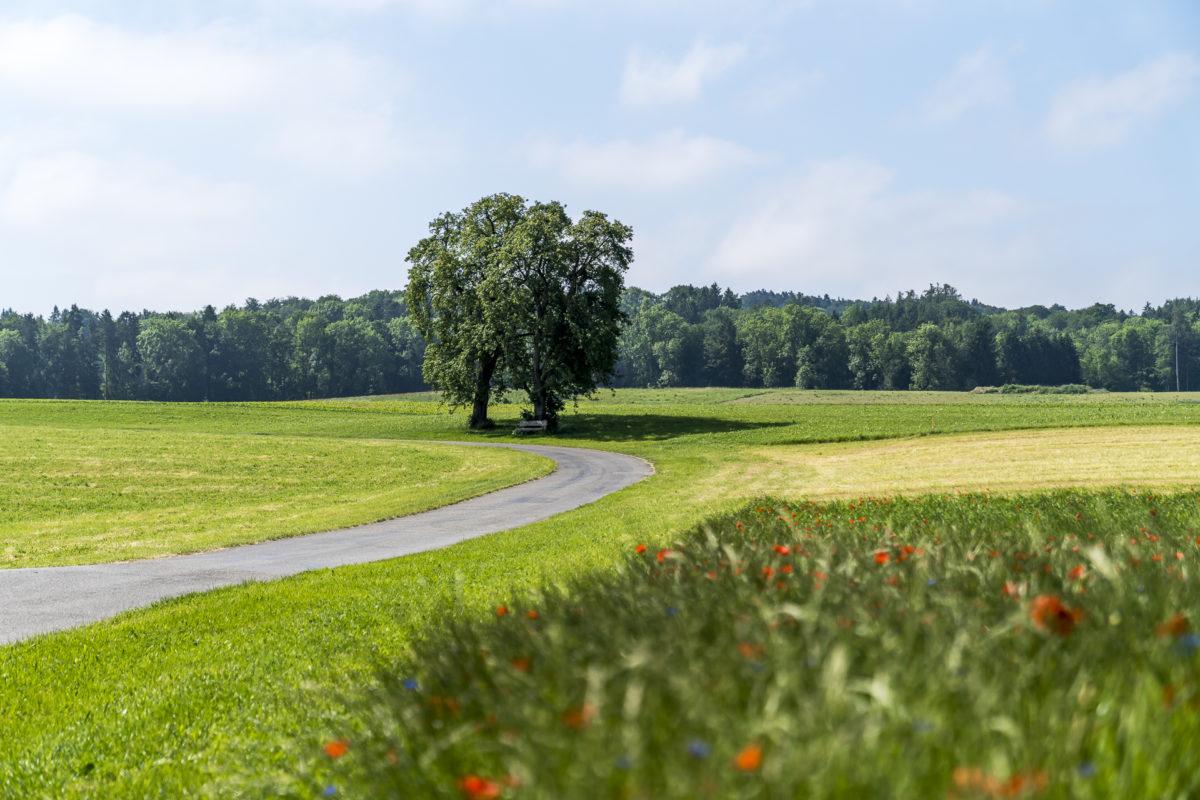 Landschaft Thurgau E-Biking