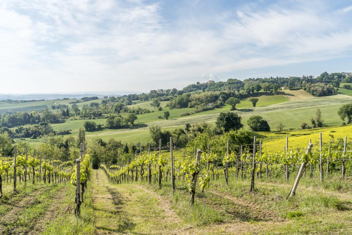 Wein Marken Verdicchio