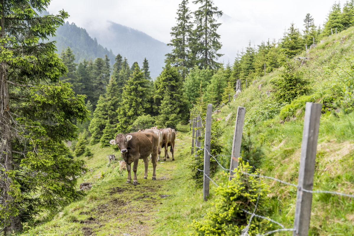Alpweiden Tirol