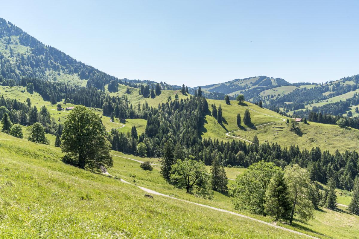 Alpwiesen Oberstaufen