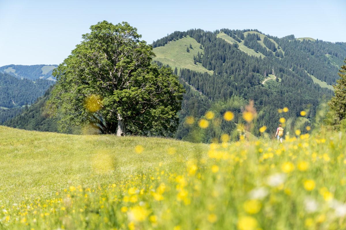 Atempausen Oberstaufen