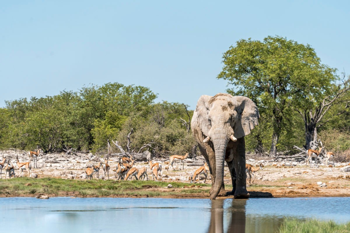 Elefant Etosha Nationalpark Safari