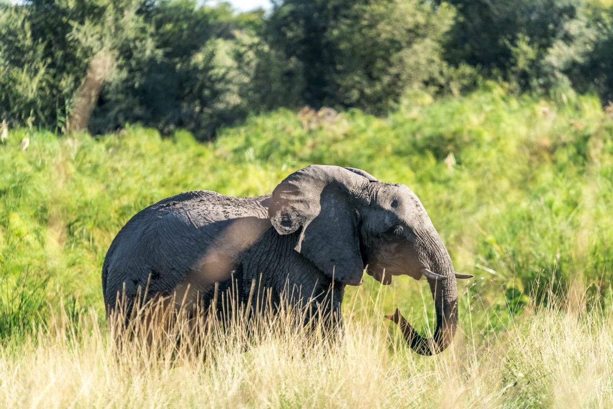 Elefanten im Bwabwata Nationalpark
