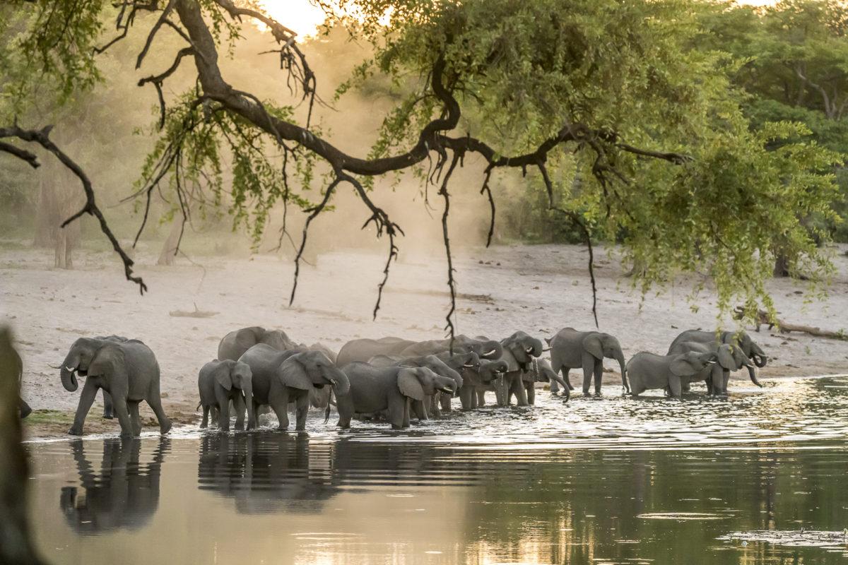 Elefantenherde Bwabwata Nationalpark