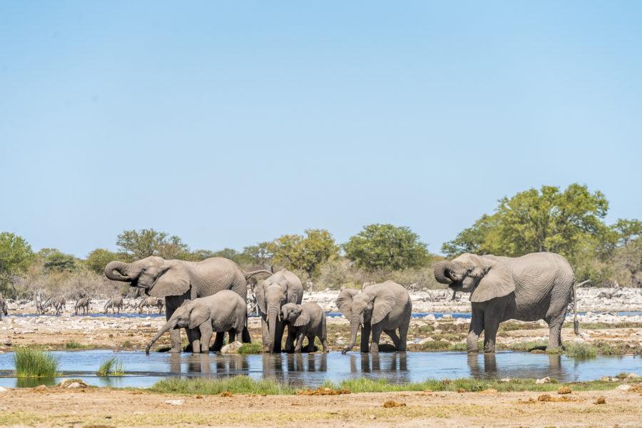 Safari in Namibia: Tipps & Equipment für die Wildtierfotografie