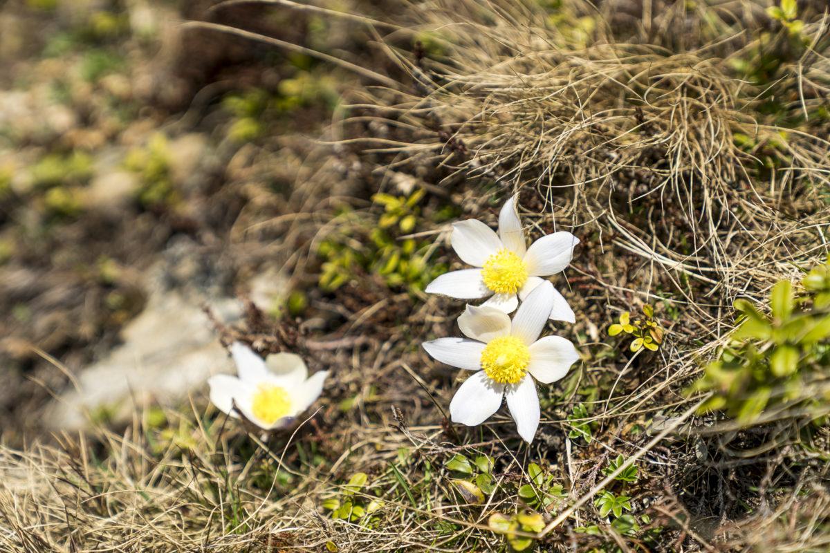 Innsbruck Trek Blumen