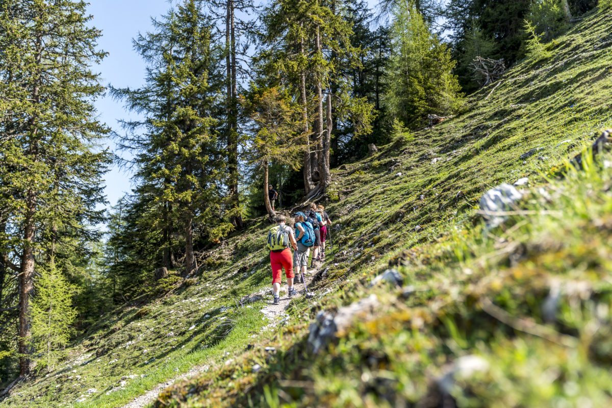 Innsbruck Trek Almweg