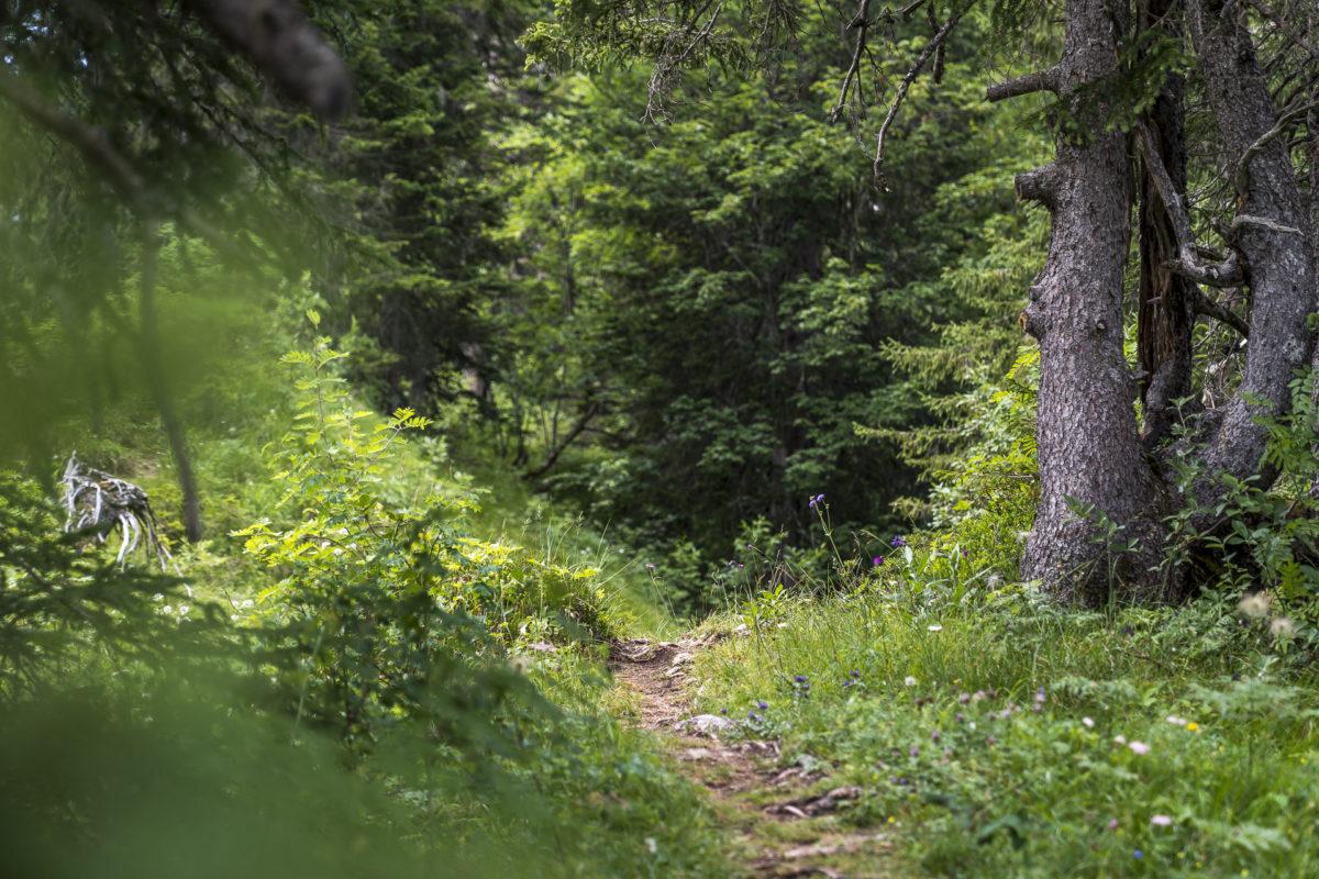 Wanderung Tour des Alpes Vaudoise