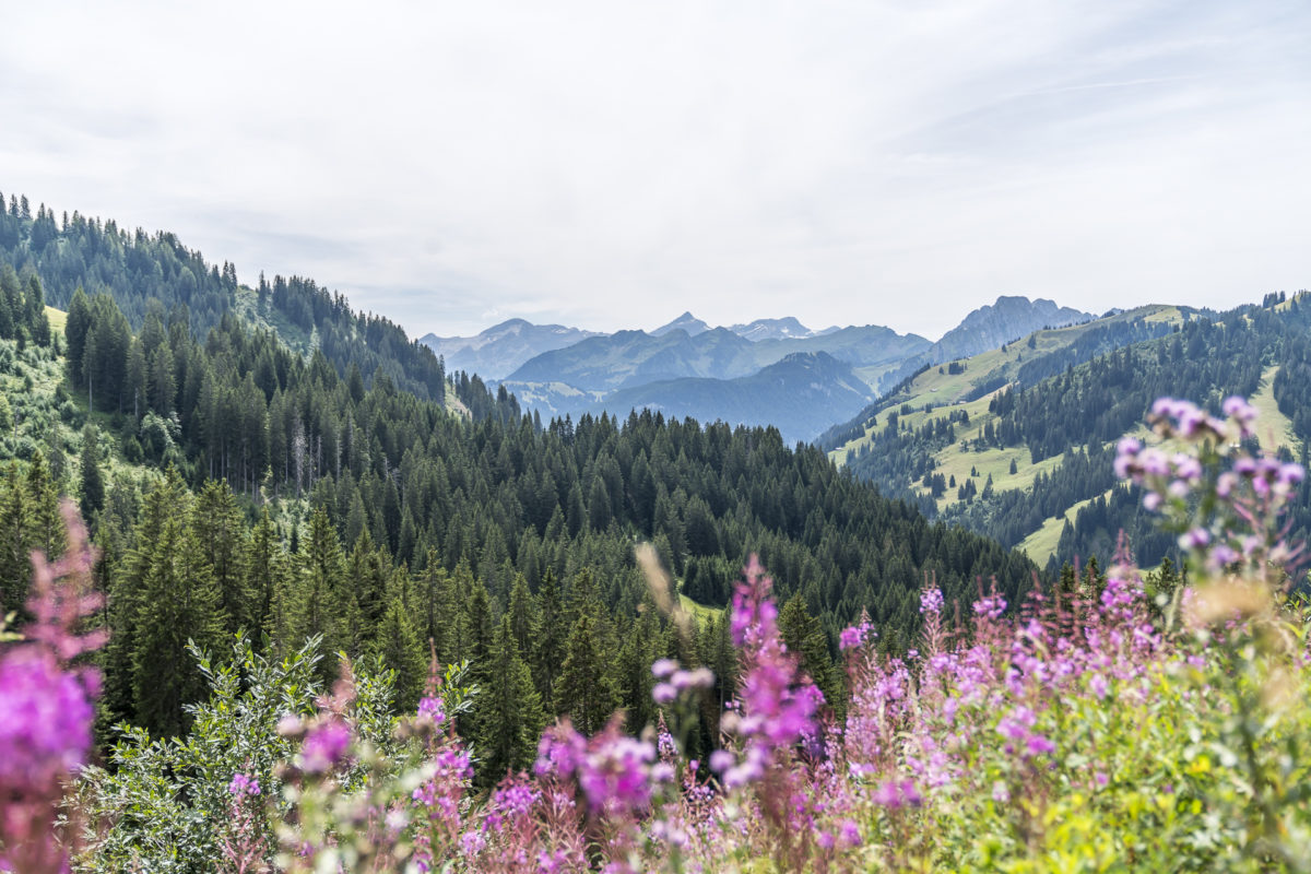 Grischbachtal Saanen