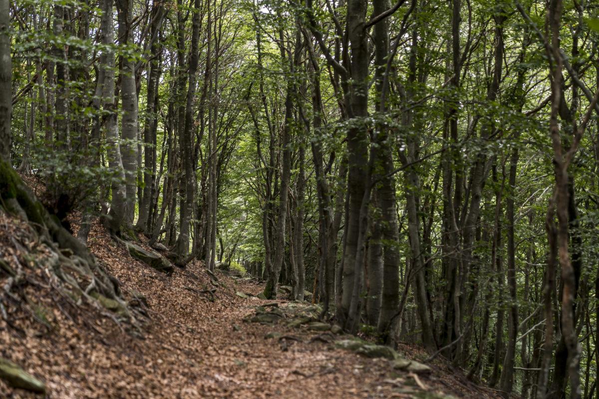 Idemini Wälder