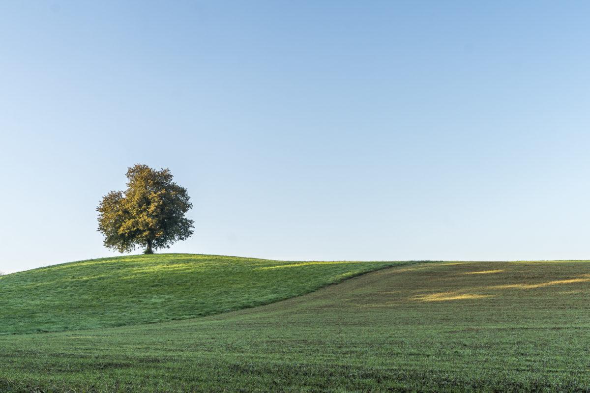 Knonaueramt Landschaft