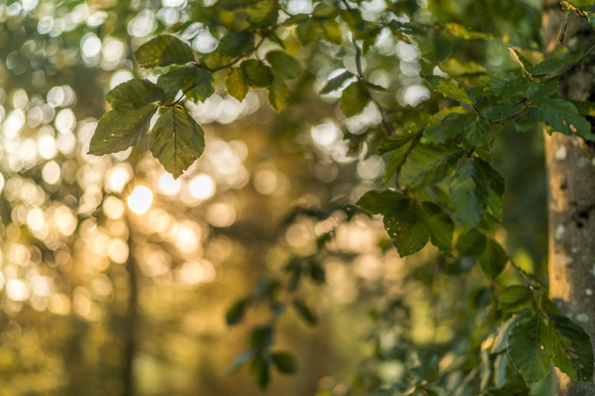 Licht Blätter Stimmung
