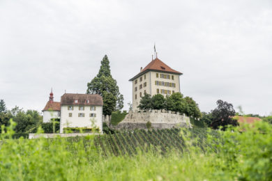Vom Hallwilersee zum Schloss Heidegg: schöne Wanderung im Seetal