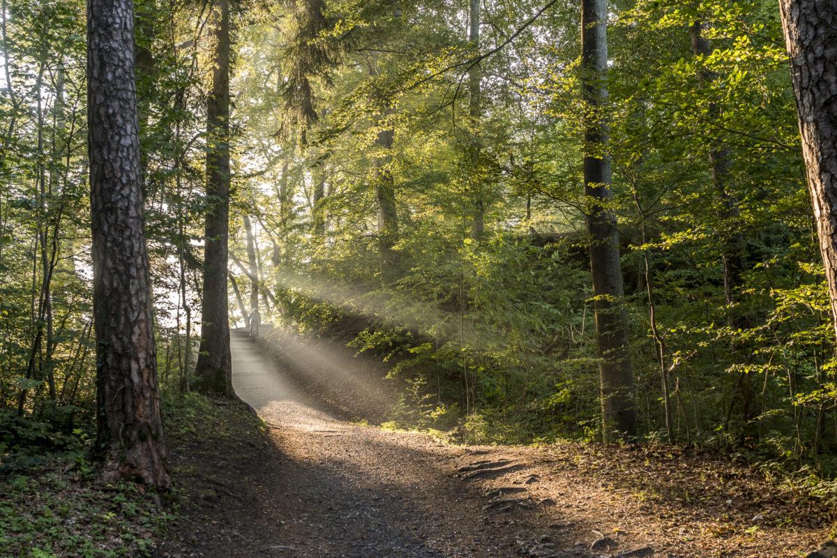 Sihlwald Natur
